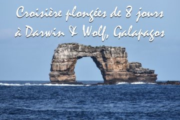 Galapagos Liveaboard Darwin & Wolf