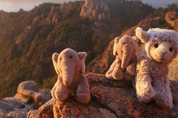 Nelephants et Nagneau Tour du monde