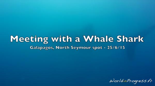 Rencontre avec un requin baleine à Seymour, Galapagos